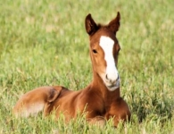 Fighting Sun - On Our Mind filly