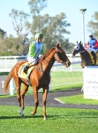 MTC Guineas Prelude, Challenge Accepted & Willie Pearson
