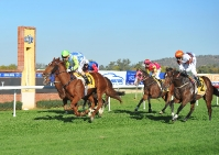 MTC Guineas Prelude, Wagga Challenge Accepted