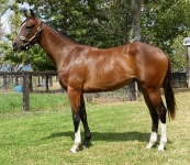So You Think - Spyglass Hill filly