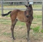 Stryker - Stacey Lee filly foal